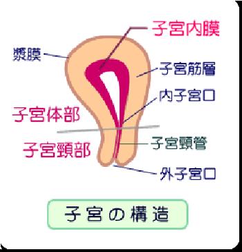 uterusのコピー