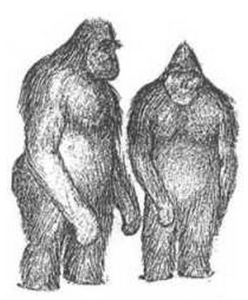 「雪男(イエティ)」の正体が明らかに! その正体とは? 科学界が未確認生物(UMA)を解き明かす