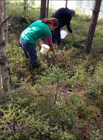 【北欧レポ】ブルーベリーかと思いきやビルベリーだっった!?家の前の森で収穫してすぐジャムにしました!