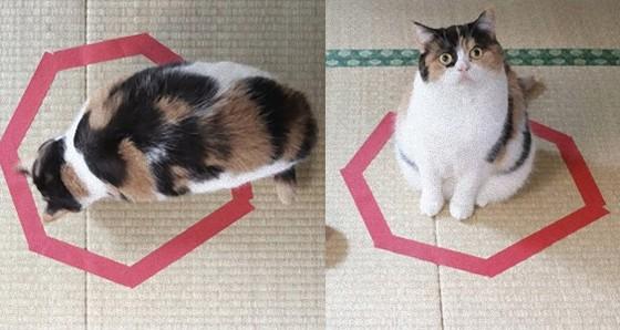 猫転送装置が「かわいすぎる!」と話題に。作り方も簡単